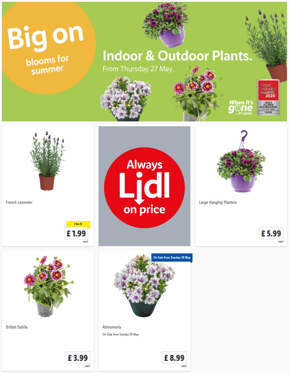 LIDL Offers this Thursday Indoor Outdoor Plants From 27th May 2021