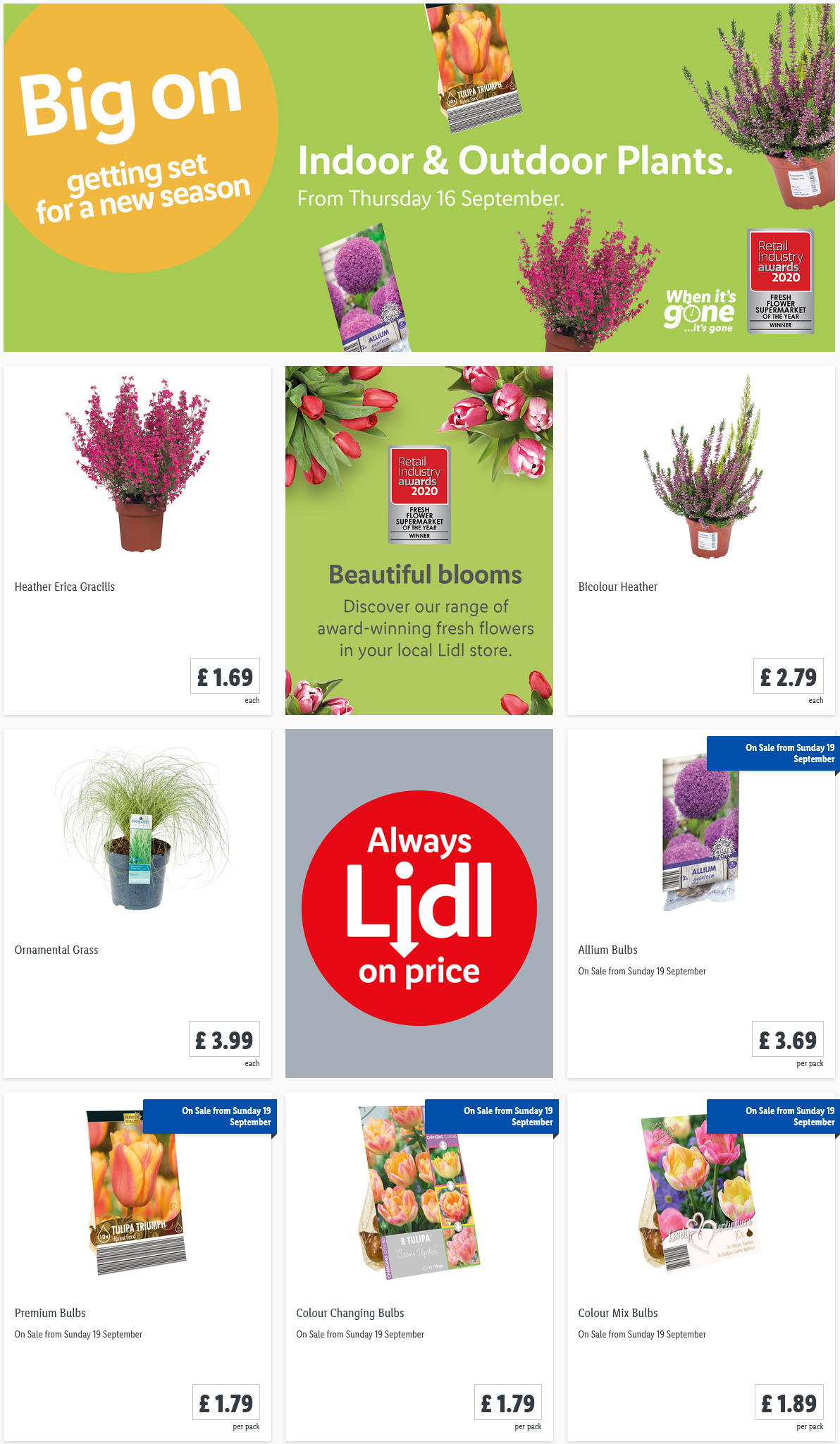 LIDL Offers this Thursday Indoor Outdoor Plants From 16th September 2021