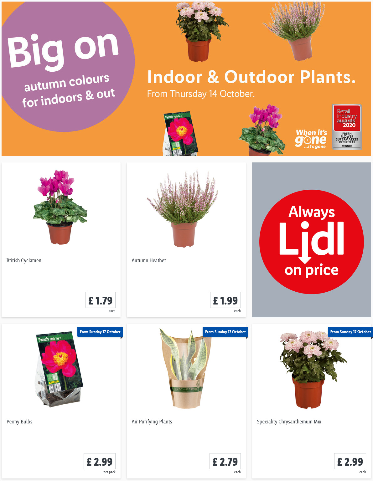LIDL Offers this Thursday Indoor Outdoor Plants From 14th October 2021